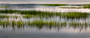 Calming Framed Prints - Cape Cod Marsh Framed Print by Bill  Wakeley