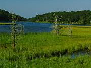Cape Cod Metal Prints - Cape Cod Muddy Creek Metal Print by Juergen Roth