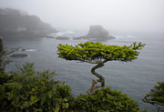 Lone Tree Prints - Cape Flattery Noble Print by Wanda Jesfield