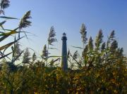 New Jersey Photo Originals - Cape May Light Autumn by Kevin  Sherf