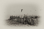 Seagull Digital Art Metal Prints - Cape May Morning Metal Print by Bill Cannon