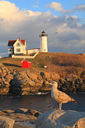 Maine Lighthouse Posters - Cape Neddick Nubble Lighthouse and Seagull Poster by John Burk