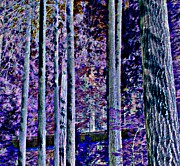 Forest At Night Prints - Capilano Dark Print by Randall Weidner