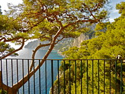 Italian Art Metal Prints - Capri panorama with tree Metal Print by ITALIAN ART- Angelica