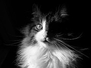 Cats Art - Captivated Cat - A Tribute by Chantal PhotoPix