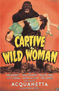 Lion Poster Prints - Captive Wild Woman, Evelyn Ankers Print by Everett