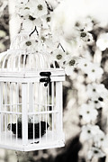 Bird Cage Posters - Captured Spring in Black and White Poster by Stephanie Frey