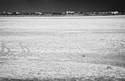 Bird Tracks Photos - Car Tracks On Larnaca Salt Flats In The Larnaka Salt Lake Republic Of Cyprus Europe by Joe Fox