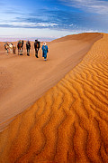 Camel Photos - Caravan on the desert by Okan YILMAZ