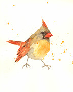 Songbird Paintings - Cardinal - Female Cardinal by Alison Fennell