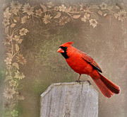 Wildlife - Cardinal 3 by Todd Hostetter