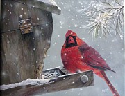 Margit Sampogna - Cardinal a Feeder