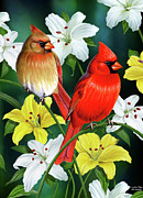 Birds Painting Prints - Cardinal Day 2 Print by JQ Licensing