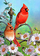 Song Birds Framed Prints - Cardinal Day 3 Framed Print by JQ Licensing