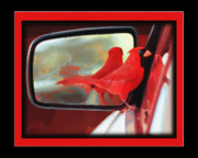 Red Finch Originals - Cardinal on Mustang by John Breen