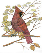 Cardinal Drawings Prints - Cardinal Print by Richard Freshour