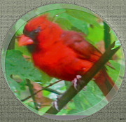 Cardinal Mixed Media Framed Prints - Cardinal Rings Framed Print by Debra     Vatalaro
