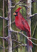 Red Cardinal Framed Prints - Cardinal Framed Print by Sam Sidders