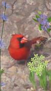Cardinal Springtime Print by Debra     Vatalaro