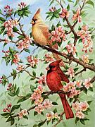 Cardinals In Watercolor Paintings - Cardinals in Apple Blossoms by Michael Scherer