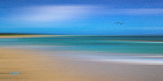 Caribbean Mixed Media Prints - Caribbean Beach Print by Michael Petrizzo