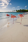 Antilles Framed Prints - Caribbean Beach with Pink Flamingos Framed Print by George Oze