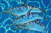 Sea Tapestries - Textiles Prints - Caribbean Bottlenose Print by Daniel Jean-Baptiste