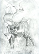 Elk Drawings - Cariboo Bull by Don  Gallacher