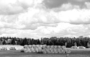 Bales Framed Prints - Cariboo Country Hay Bales Framed Print by Will Borden