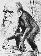 Origin Photo Posters - Caricature Of Charles Darwin, 1871 Poster by Science Source