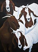 Billy Goats Framed Prints - Carolina Goats Framed Print by Cindy Champion