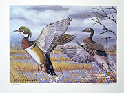 Wood Duck Paintings - Carolina Wood Duck by Jim Hitesman