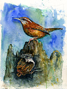 Wren Paintings - Carolina Wren and Baby by John D Benson