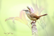 Wren Art - Carolina Wren in Early Spring by Bonnie Barry
