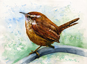 Wren Paintings - Carolina Wren Large by John D Benson