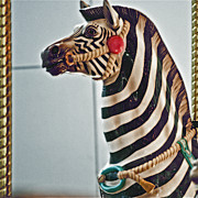 Carousel Zebra Print by Bill Owen
