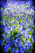 Wild Flowers Framed Prints - Carpet Of Blue Framed Print by Meirion Matthias