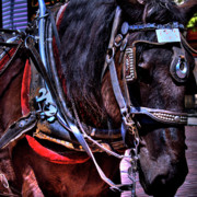 Carriage Horse Photos - Carriage Horse by David Patterson