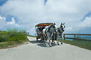 Atlantic Beaches Originals - Carriage Ride by Lori Goodwin