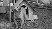 Abandoned Pets Photos - Carry me home by Cristina Marcolla Carnelos