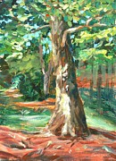 Boston Mountain Prints - Carson Park Tree Print by Claire Gagnon