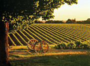 Wine Vineyard Photos - Cart Wheels At Barossa Valley Vineyard, South Australia by Peter Walton Photography