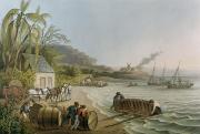 West Indies Paintings - Carting and Putting Sugar Hogsheads on Board by William Clark