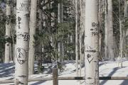 Snow Scenes Metal Prints - Carved initials in the Metal Print by Stacy Gold