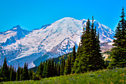 Snow Prints - Cascade Meadow Near Mt Rainier Print by David Patterson