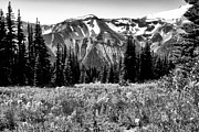 Snow Prints - Cascade Mountain Range Print by David Patterson