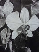Estephy Sabin Figueroa Drawings - Cascade of Orchidds by Estephy Sabin Figueroa