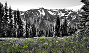 Snow Prints - Cascade Range Meadow Print by David Patterson