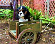 Puppy Digital Art Metal Prints - Casey In The Cart Metal Print by Patricia Stalter
