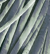 Cashmere Wool Fibres, Sem Print by Steve Gschmeissner